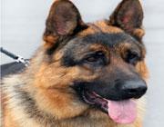 Canine/Dog Section